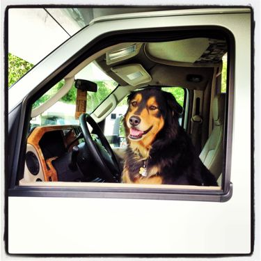 Gigamom_RV_Driving_Dog