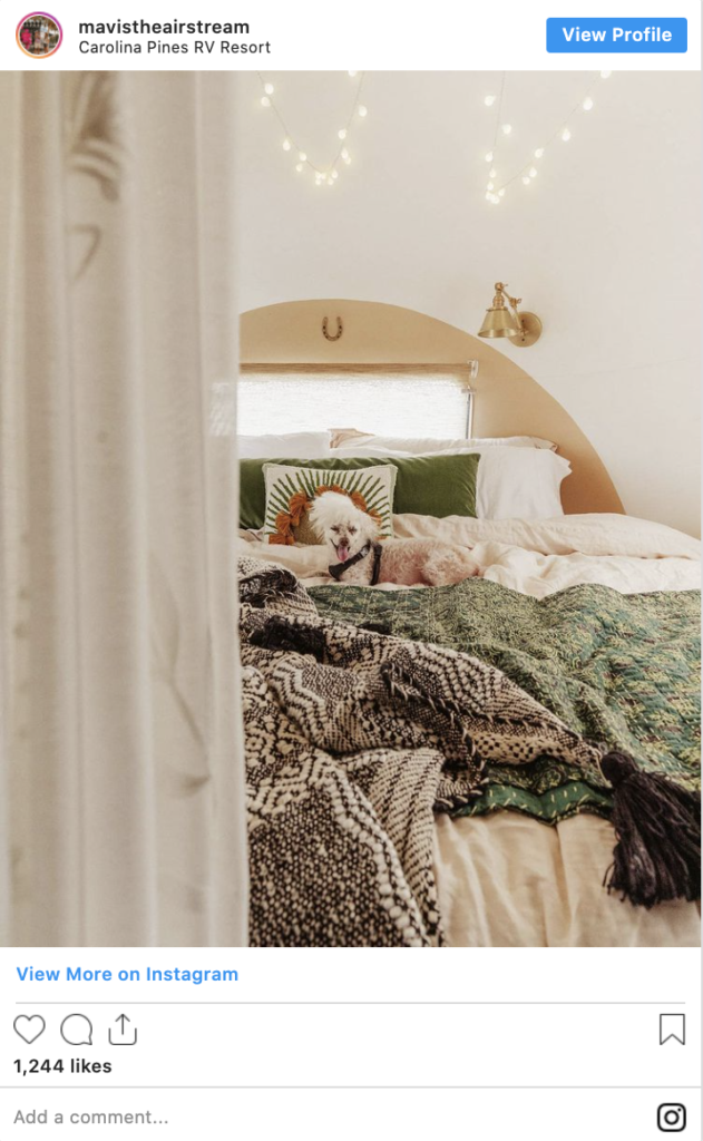 dog on colorful bed in an rv